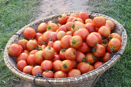 Fruit, Food, Vegetable, Healthy, Grow, Tomatoes