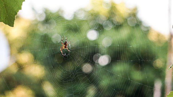 Nature, Wallpaper, Insect, Spider, Color, Model, Plant