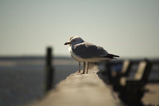 Bird, Water, Nature, Wildlife, Outdoors, Wing, Sea