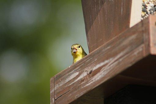 Outdoors, Bird, Wildlife, Nature, Wood, Bird Feeder