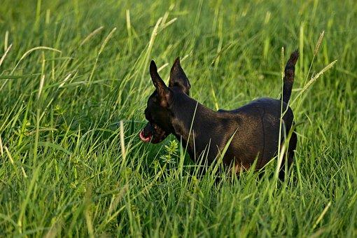 Dog, Black, Outdoors, Ears, Spring, Animal, Meadow
