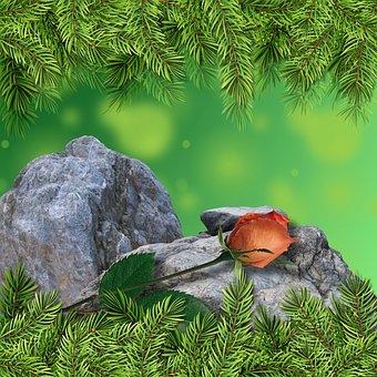 Rosa, Rock, Nature, Background, Design, Bokeh, Flowers