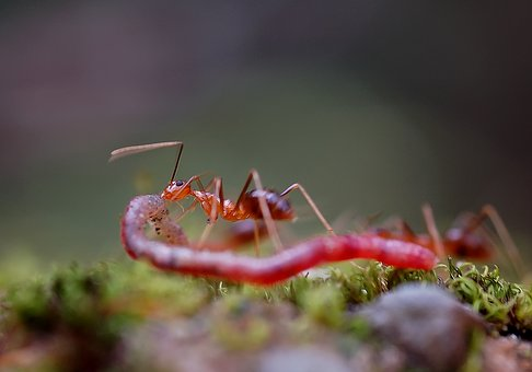 Insect, Nature, Compact