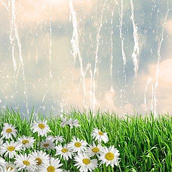 Nature, Flowers, Margaritas, Sky, Clouds, Design