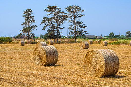 Hay, Agriculture, Straw, Farm, Nature, Bale, Field