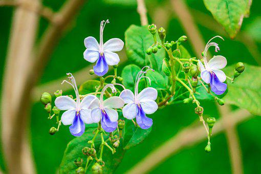 Nature, Leaf, Flower, Plant, Summer, Outdoor, Garden