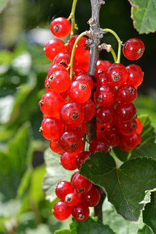 Fruit, Berry, Healthy, Sweetness, Food, Currant, Savory