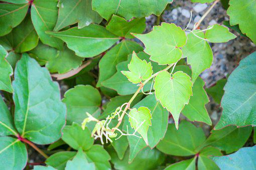 Leaf, Nature, Plant, Kinds Of Food, Outdoor, Fresh