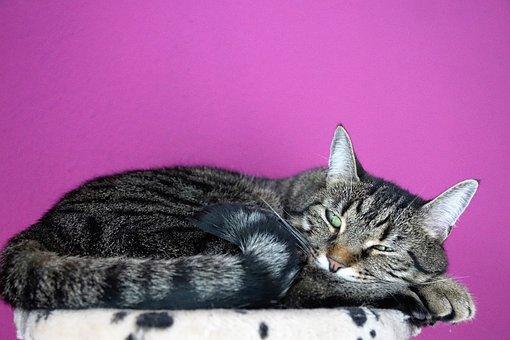 Cat, Cute, Animal, Pet, Domestic, Mammal, Kitten, Grey