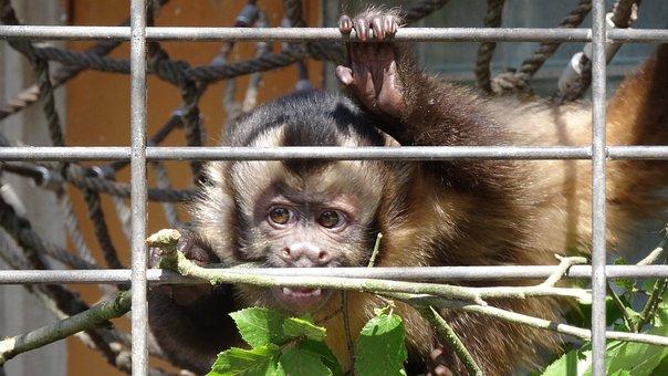 Animal, Mammal, Cage, Nature, Cute, Monkey