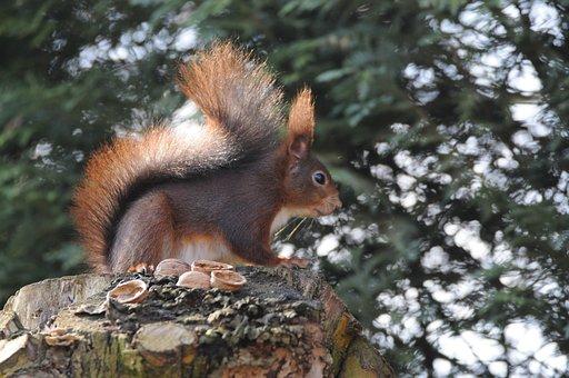 Mammal, Squirrel, Tree, Nature, Rodent, Animal World