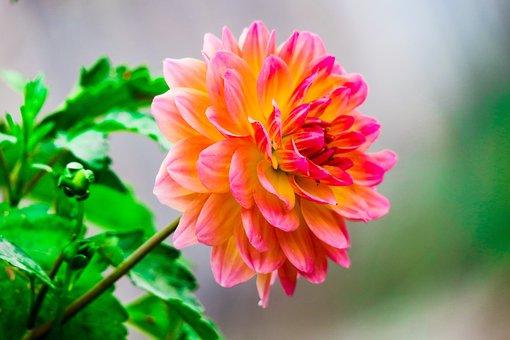 Nature, Plant, Flower, Summer, Garden, Petal, Beautiful