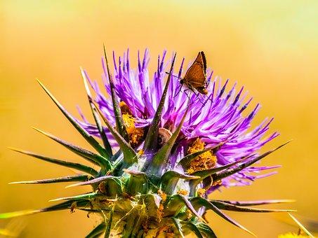 Nature, Flora, Flower, Spring, Closeup, Thistle