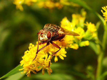 Nature, Insect, Apiformes, Flower, Plant, Animals