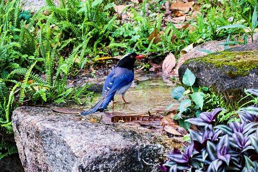 红嘴蓝鹊, Nature, Garden, Outdoor, Park