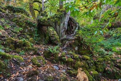 Nature, Wood, Landscape, Mosses, Leaf, Tree, Plant