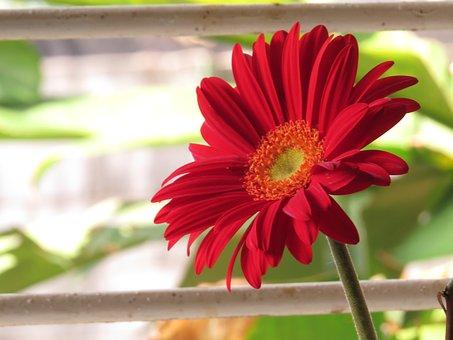 Plant, Nature, Flower, Summer, Garden, Nice, Petal