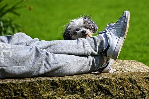 Dog, Animal, Mammal, Canine, Person, Body Part, Leg