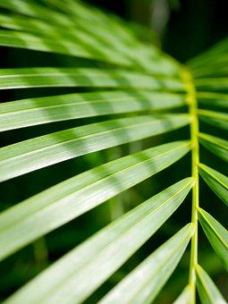 Leaf, Growth, Flora, Lush, Nature, Frond, Plant