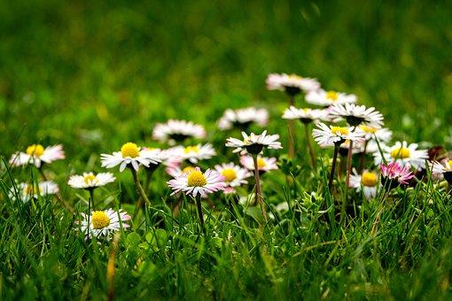 Nature, Flower, Meadow, Field, Grass, Plant, Summer