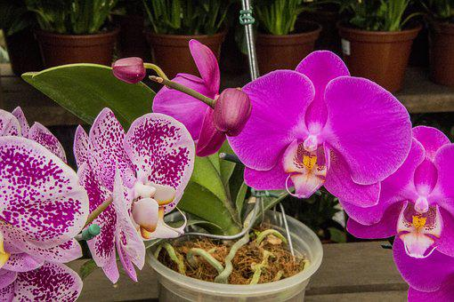 Orchid, Orchid Color, Flower, Plant