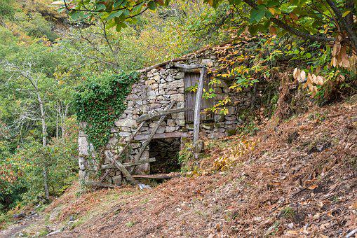 Nature, Wood, Outdoors, Tree, Plant, Home, Old, Stone