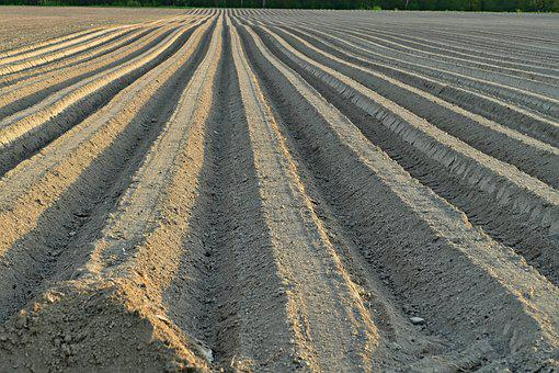 Soil, The Preparation Of The, Planting, Field, Ground
