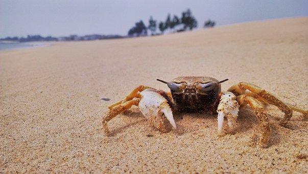 Sand, Beach, Nature, Seashore, Sea, Crab