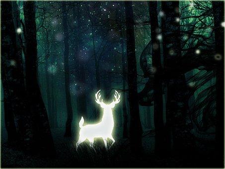 Dark, Light, Skittish, Nature, Deer, Night, Animal