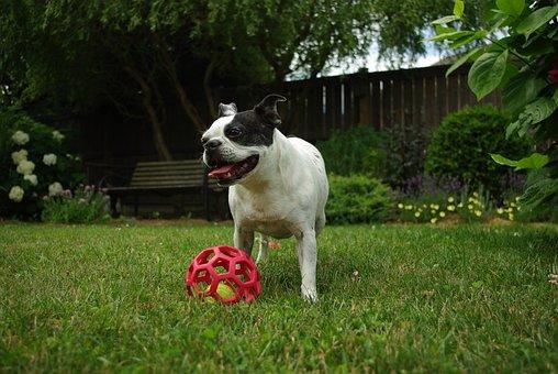 Grass, Dog, Animal, Mammal, Summer, Cute, Portrait