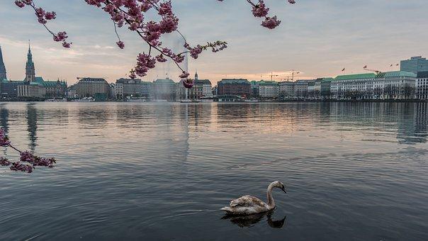 Waters, Sky, Nature, Travel, Sea, Alster, Hamburg