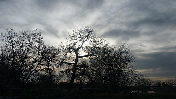 Tree, Nature, Landscape, Dawn, Fog