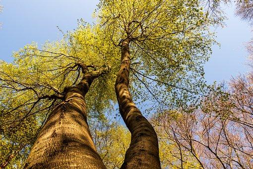 Tree, Branch, Wood, Nature, Park, Forest, Landscape