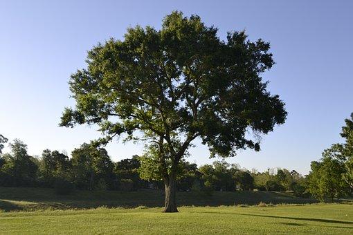 Tree, Nature, Landscape, Grass, Outdoors, Summer, Wood