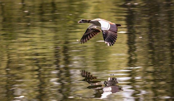 Bird, Waters, Reflection, Puddle, Lake, Animal World