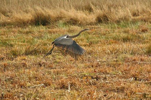 Nature, Bird, Wildlife, Outdoors, Grass, Animal