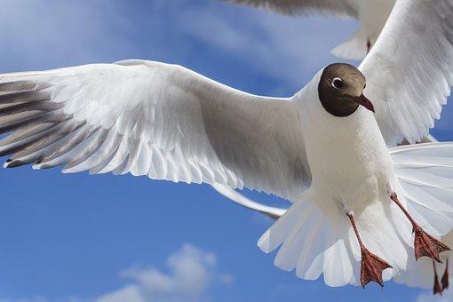 Bird, Feather, Nature, Wing, Animal World