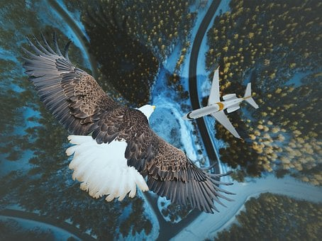 Nature, Water, Wildlife, Bird, Outdoors, Travel, Wing