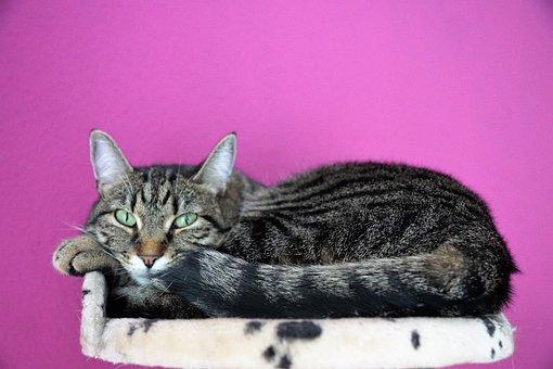 Cat, Cute, Animal, Mammal
