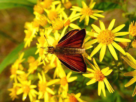 Nature, Insect, Flower, Summer, Plant, Animals
