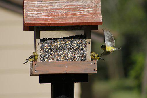 Wood, Birdhouse, Outdoors, Feeder, Bird, Bird Feeder