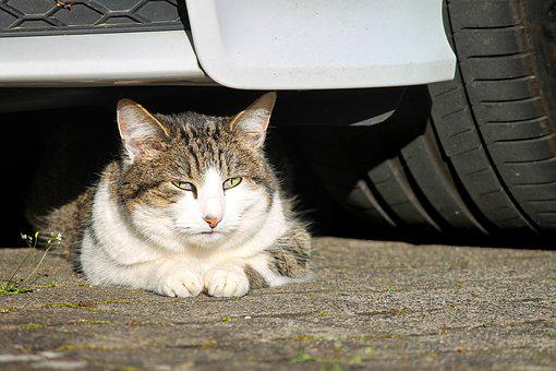 Cat, Are Car, Watch, Attention, Domestic Cat, Pet