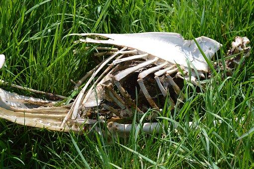 Grass, Nature, Outdoors, Death, Bone, Animal, Dead