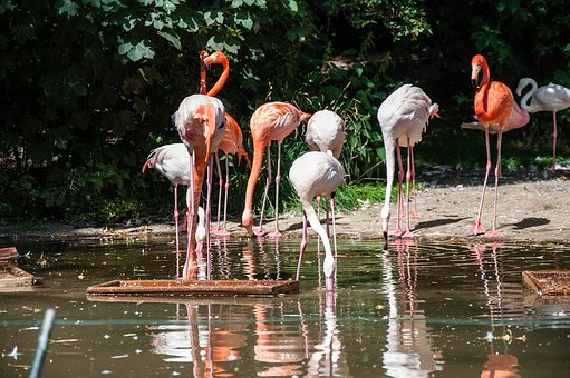 Nature, Waters, Flamingo, Animal World
