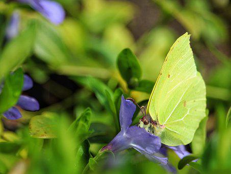Nature, Flower, Butterfly, Leaf, Insect