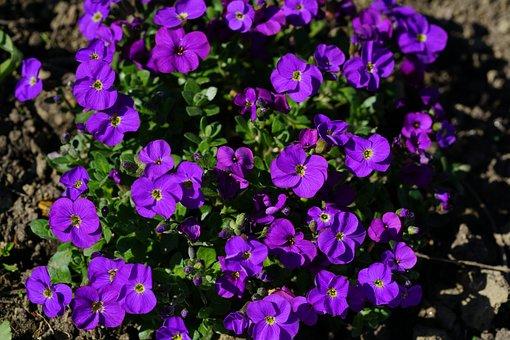 Blossom, Bloom, Purple, Blue Pillow, Flower, Violet