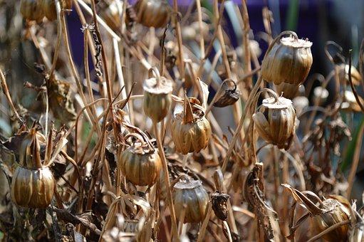 Nature, Outdoors, Food, Flora, Seed, Dead, Dry, Crisp
