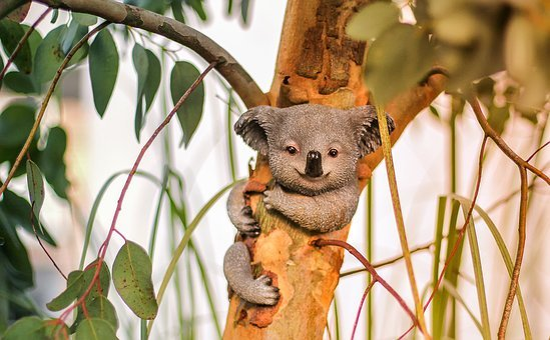 Nature, Animal, Mammal, Tree, Koala, Koala Bear