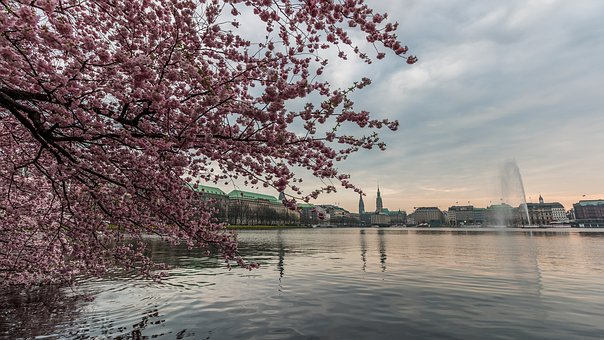 Tree, Nature, Season, Landscape, Waters, Alster
