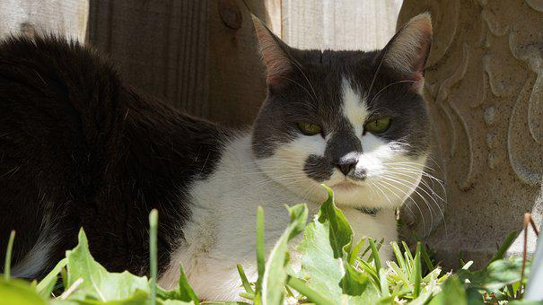 Cat, Animal, Cute, Mammal, Pet, Domestic, Portrait